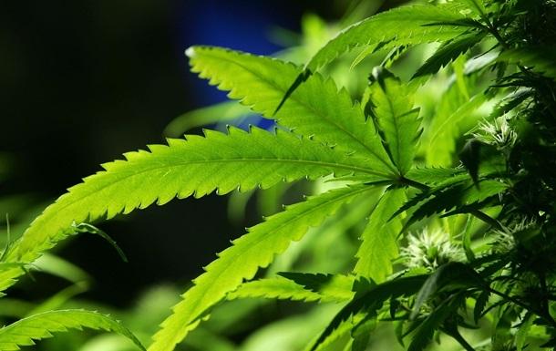 Ученые назвали новую опасность марихуаны