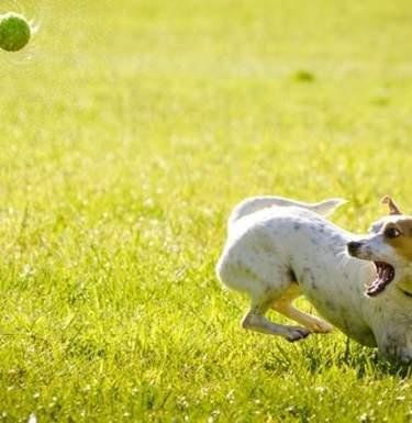 Как вывести блох у домашних животных: эффективные способы