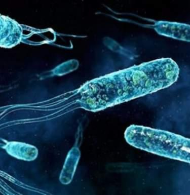 Женщину убила бактерия, резистентная ко всем известным антибиотикам