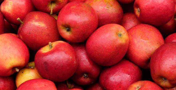Свежие яблоки купить в СПб - как яблоки купить с доставкой на выгодных условиях
