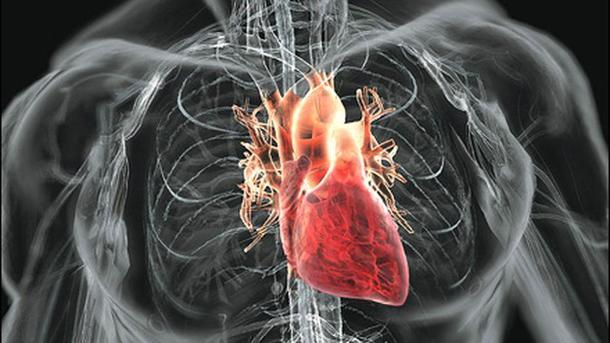 10 эффективных способов снизить риск развития инфаркта