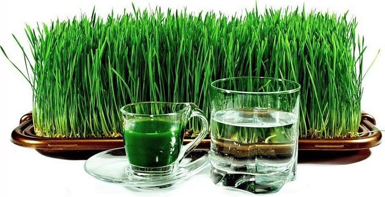 10 преимуществ употребления сока ростков пшеницы для здоровья