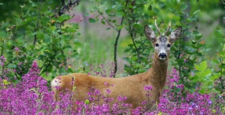 Воронежский заповедник – уголок нетронутой природы в центре России